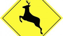 beware of deer collisions